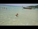 Даже Собаки в Тайланде счастливей чем люди в России