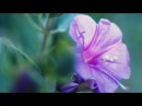 Peaceful Music, Relaxing Music, Instrumental Music, Garden of Light by Tim Janis