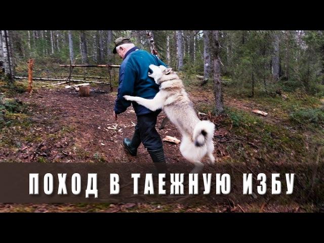 Поход в лес. В таёжную избу.