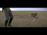 Dances with Wolves (1990) - Two Socks Scene