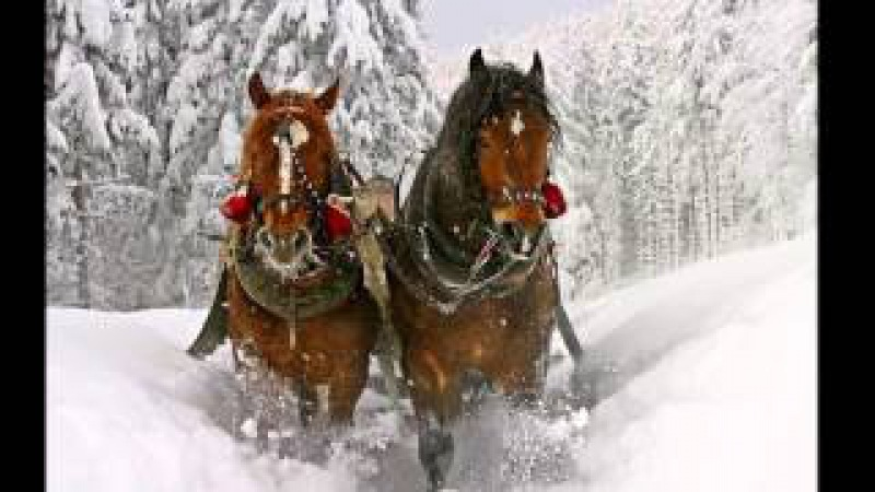 Сердце на снегу... Стелла Джанни