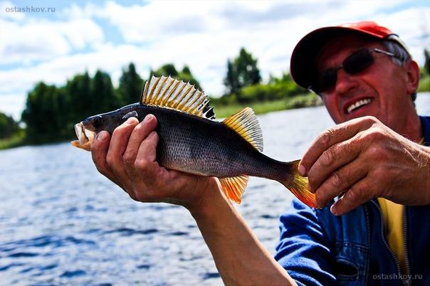 Август на селигере рыбалка