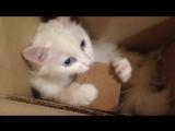 Лилу и коробка