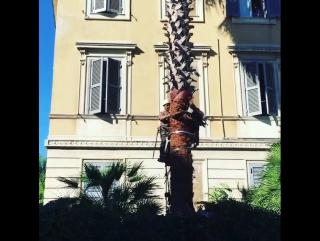 #verdeitalia #potatura #altofusto #treeclimber #iv... Рим 04.07.2017