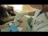 Это калмыцкие ветврачи!!!  Спасли собачку с парализованными задними лапами | Калмыкия