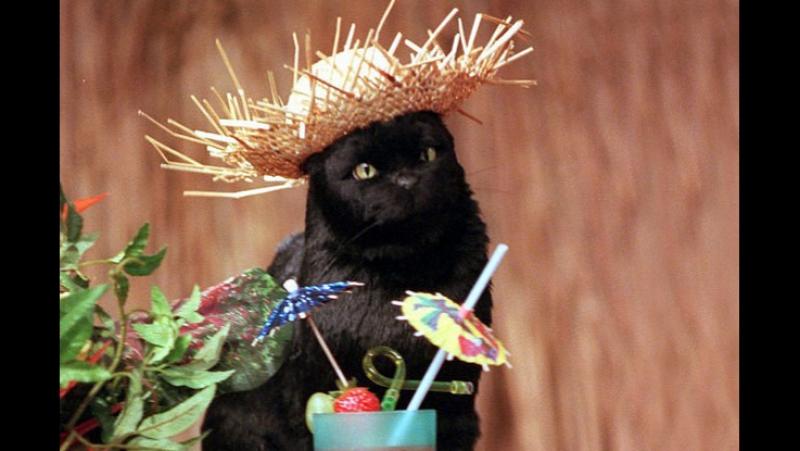 Лучшие шутки кота Салема из «Сабрины - маленькой ведьмы»