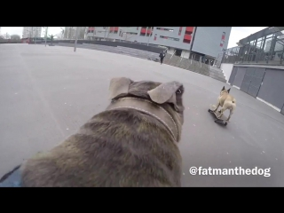 Day out filming Eric the skateboarding French Bulldog. Skateboarding dogs.