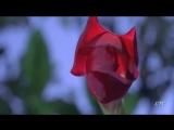Евгений Дога - Вальс цветов
