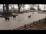 Собаки исполняют гимн Одессы на Приморском бульваре