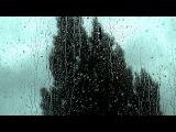 💨Rain Hitting Window with Wind Through Trees Sound (long version)