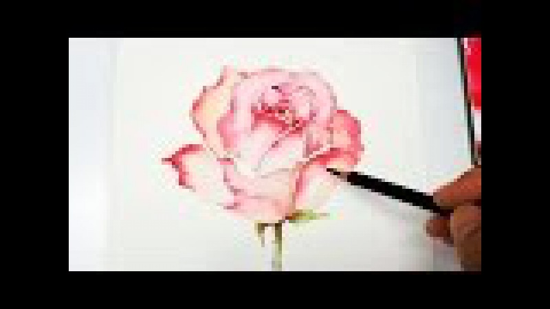 [LVL4] Rose Painting Tutorial