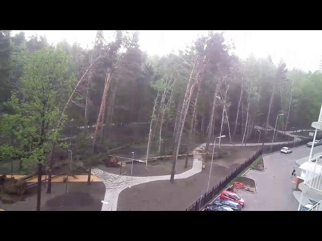 Ураган повалил деревья на детской площадке! 29.05.17. Красногорск, Ул.Игоря Мироушкина, д.12,