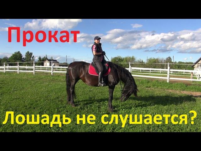 Претензии к прокатной лошади или: