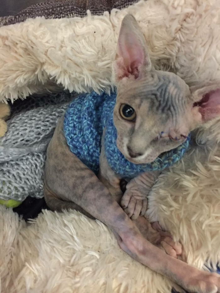Женщина не знала, как ее бультерьер отреагирует на одноглазого кота, которого она взяла из приюта