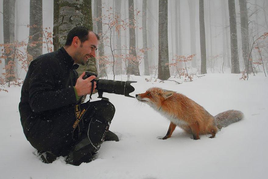 wDEIan0Hjig - Фотографии из жизни лисы (20 фото)