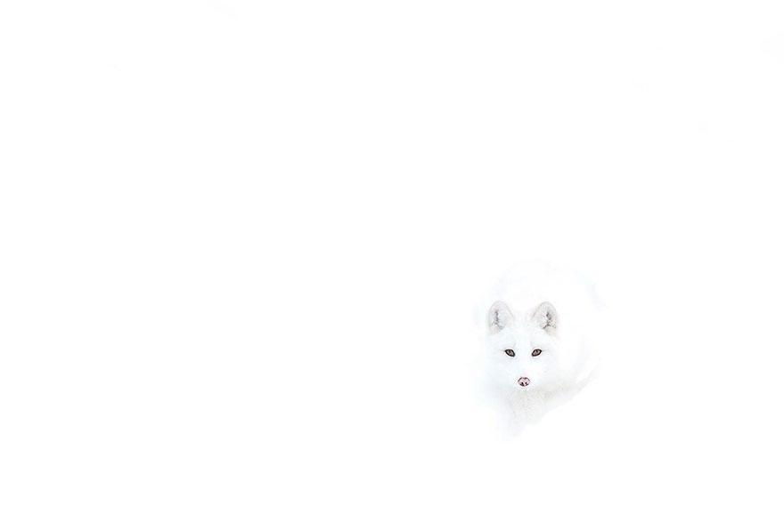 cZwvEWfJNLI - Фотографии из жизни лисы (20 фото)