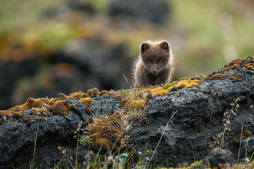 uCSj 0 93TQ - Фотографии из жизни лисы (20 фото)