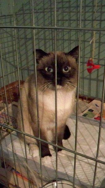Новосибирск . Найден молодой котик , ищем старых или новых хозяев ! К