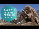 Jurassic Park IRL- How the mammoth can help our future