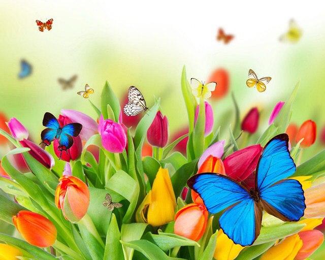 Афиша Тольятти Цветы.Доставка цветов в Тольятти