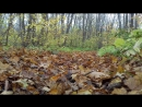 Autumn ride in the forest