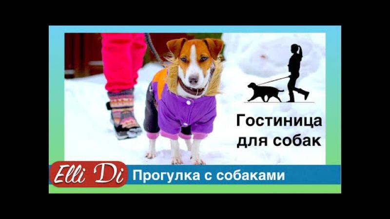 Прогулка с собакой - два джек рассел терьера! Гостиница для собак у Elli Di.