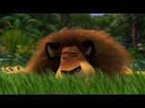 Madagascar 1 - What a Wonderful World