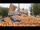 На нашей улице праздник: в Керчи грузовик рассыпал яблоки