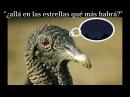 Café Tacvba Zopilotes EL OBJETO ANTES LLAMADO DISCO audio HD y Letra