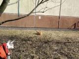 АГТ Вуднвэй Пэйдж и рыжий кот.