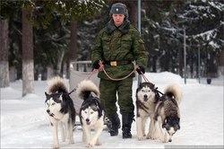 Под Самарой будут гонять военных собак    Служебные лайки продемонстри