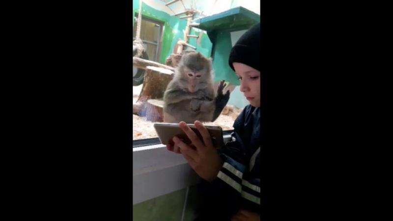 мой сын с обезьянкой на ты.