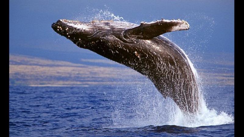 Что за игра «Синий кит» _морекитов _тихийдом _разбудименяв420 _f57 _f58