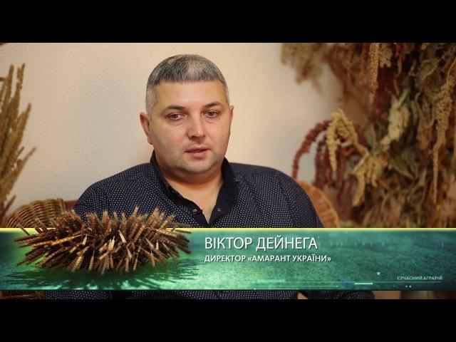 Амарант України в телепередачі Сучасний Аграрій в ефирі 5 каналу