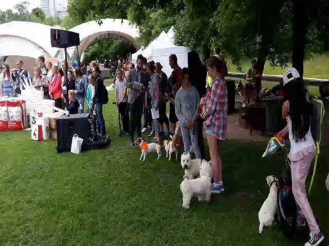 Фрисби-шоу на фестивале Собаки в городе