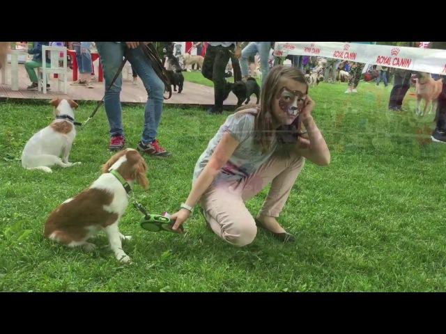 Фестиваль Собаки в городе, 10 июня 2017 года