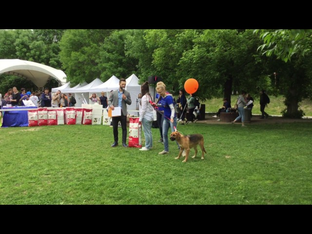 Собака Линда уезжает домой на фестивале Собаки в городе