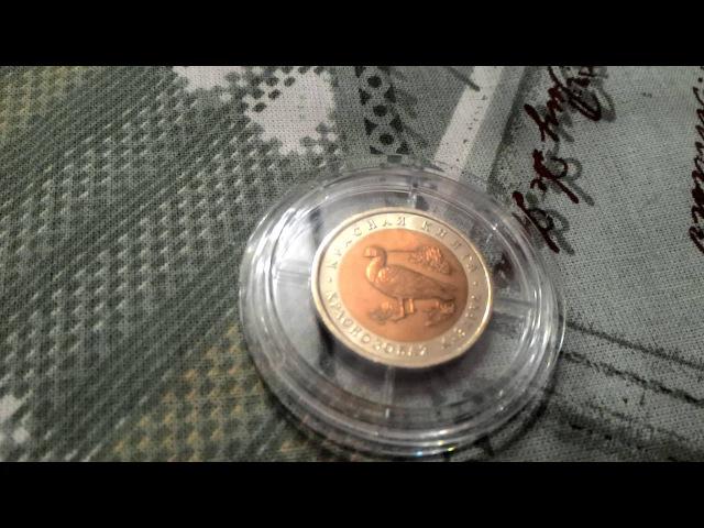 7 Обзор монеты из серии Красная книга 10 рублей Краснозобая казарка