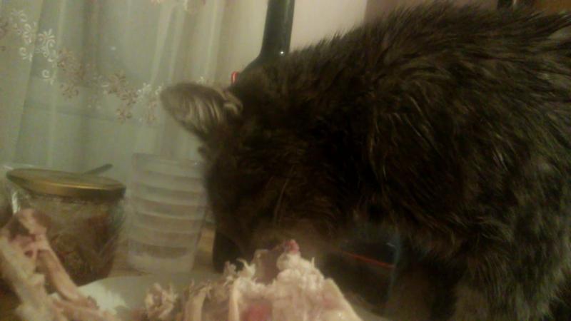 Мой новый сожитель кот-Глиномес