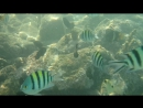 Рыбки Красного моря 2014 г.