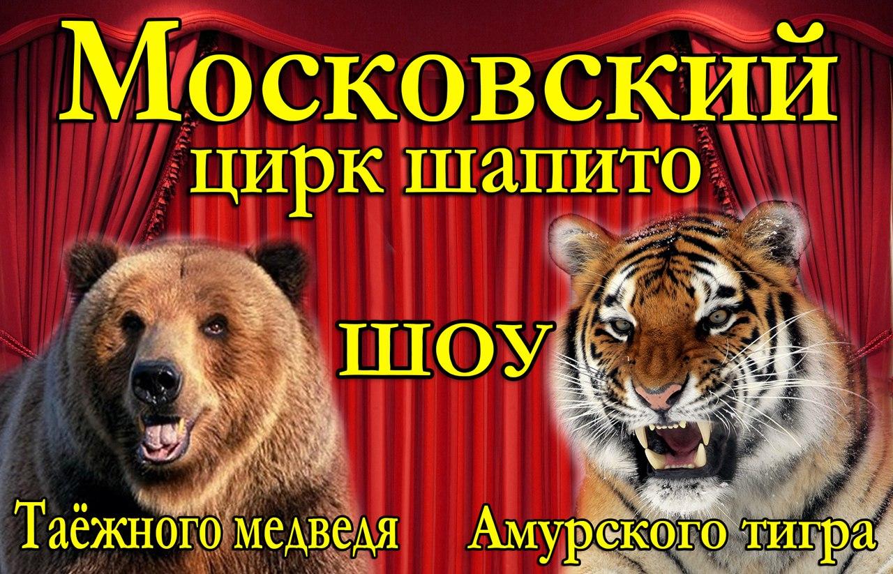 В Зеленчукскую приехали амурский тигр и таёжный медведь