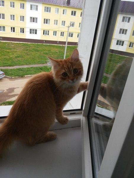 Нашелся котенок в м-р Венеция!!!! Звонить по телефону 8 920 647 68 30