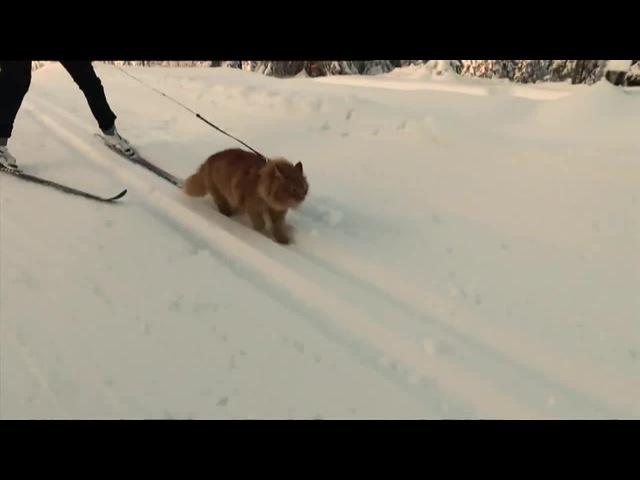 Running cat!! бегущий котейко