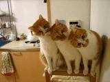 День,когда коты синхронизировались!