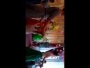 Танец мам с сыновьями. Хореограф Патынка Светлана.