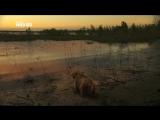 Мамонтёнок Застывший во времени (Waking the Baby Mammoth, 2009)