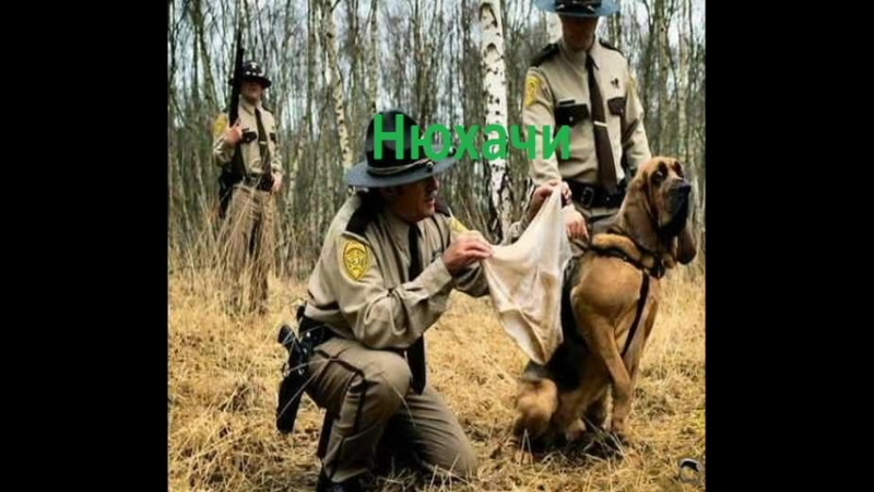 Нюхачи (Наши собаки)