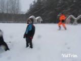 Снежный ком оршанцев