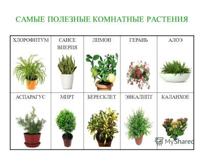 Комнатные цветы для дома полезные