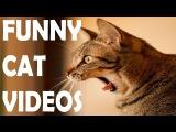 Приколы Про Кошек Самые Смешные 2016 ★ Смешные Кошки и Коты До Слез